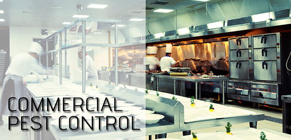 commercial-pests-houston